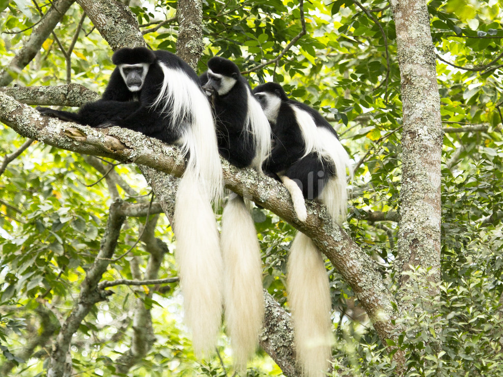 Arusha National Park: Facts, Features and More
