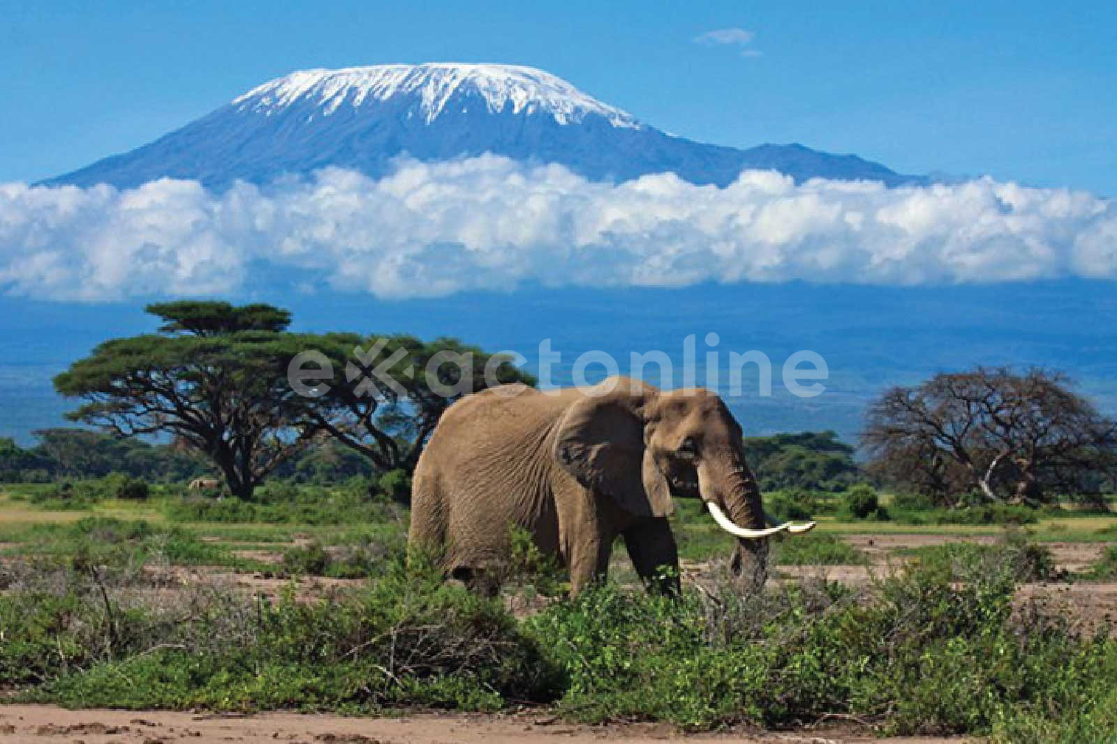 Kilimanjaro National Park : Facts, Features and More