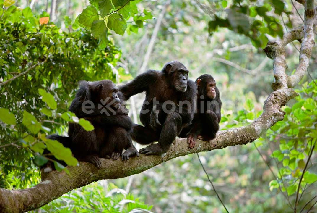 Gombe National Park : Facts, Features and More